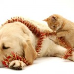Gli auguri adatti a chi ama cani e gatti