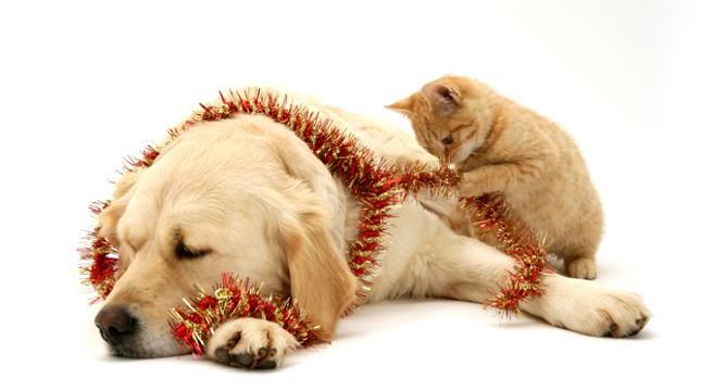 Auguri a tutti quelli che amano cani e gatti petpassion for Animali a natale