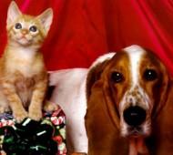 cane-gatto-regali-natale