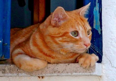 gatto-gattaiola