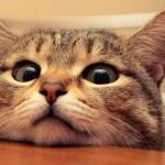 Le regole di vita del gatto domestico