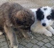 cucciolo-cane-adozione