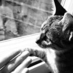 17 febbraio 2018: Festa Nazionale del Gatto