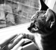 gatto-festa