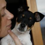 Una Staffordshire Bull Terrier dal cuore tenerissimo e il suo amico Jack Russell