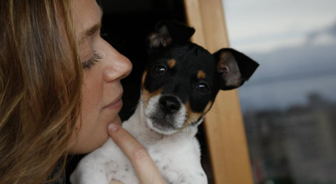 paco-jack-russell