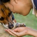 Addestramento: come premiare il cane?