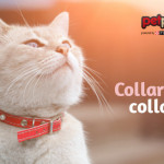 Il collare è pericoloso per i gatti?