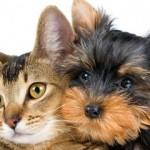 Speciale vacanze animali: consigli per viaggiare con cane e gatto