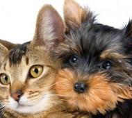 viaggiare-cane-gatto-1