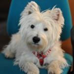 Portare il cane al lavoro rende migliore l'atmosfera in ufficio