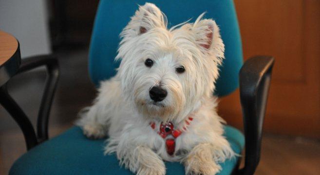 Portare Il Cane Al Lavoro Rende Migliore Luatmosfera In Ufficio Petpassion  Blog With Portare Il Cane Al Canile.