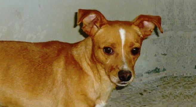 Cane adozione for Tequila e bonetti cane razza