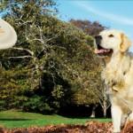 Tonus Dog Chow alimenta l'energia del tuo cane con sport, divertimento e premi per tutti
