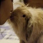 Foto e video dell'American Fuzzy Lop più amato della community: il coniglio Bubble