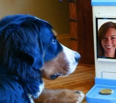 videoconferenza_cani
