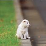 Abbandono di animali domestici: cosa si rischia e come denunciarlo