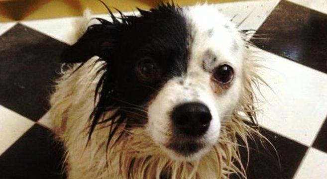 Cerchi un cagnolino di piccola taglia adotta filippo for Cani giocherelloni
