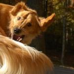 Perché i cani inseguono e si mordono la coda?