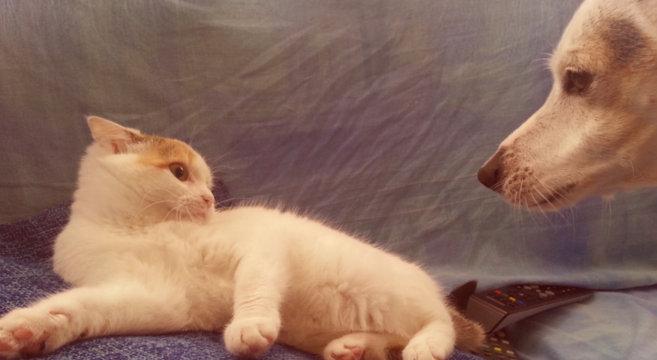 cane-gatto-amici