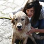 Come e perch lavare il gatto e come asciugarlo petpassion blog - Come fare il bagno al cane ...