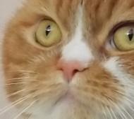 boris-gatto-rosso