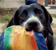 cane-giochi