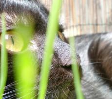 gatto-erba-gatta