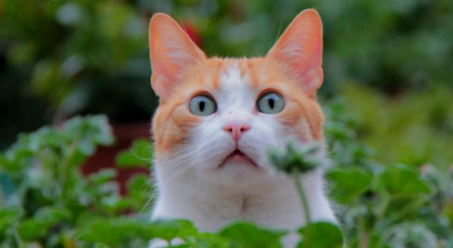 gatto-cade-in-piedi