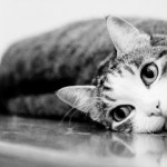 Perchè il gatto si strofina sulle gambe delle persone?