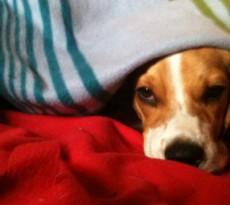 cane-freddo-coperta
