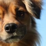 Cane anziano: come tenere giovane la sua mente