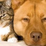 Botti di Capodanno: come aiutare il tuo animale domestico