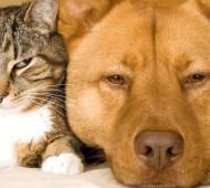 cane-gatto-paura-capodanno