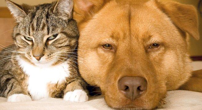 Souvent Auguri a tutti quelli che amano cani e gatti. | Petpassion Blog BP53