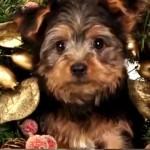 Video di cuccioli e gattini che vi augurano Buon Natale!