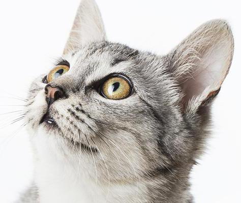Gatti di casa e colonie feline come proteggerli dal for Allontanare i gatti