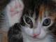 gattino-lettiera-uso
