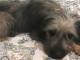cane-birba-adozione