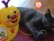 ciotolino-mascotte-petpassion-657x360-2