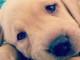 cucciolo-consigli-copertina