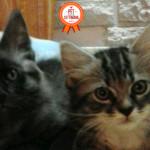 Storia dei gatti Cicciotto e Tigrotto, due fratellini fortunati [video]