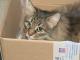 gatto-randagio-neonato