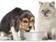 cani-gatti-alimentazione