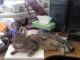 gatti-anti-stress-ufficio