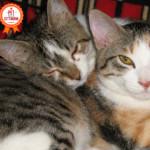 Picia, Micione e i loro 9 a-mici: storia di un'allegra banda di gatti
