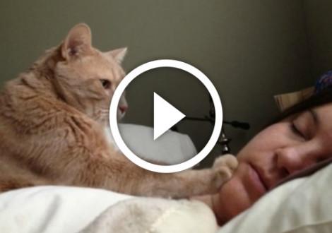 gatto-sveglia-video