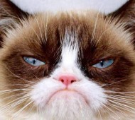 grumpy-cat-facebook