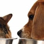 Quanto devono bere cane e gatto?