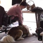 Cani in ufficio: il TG5 racconta l'iniziativa Purina